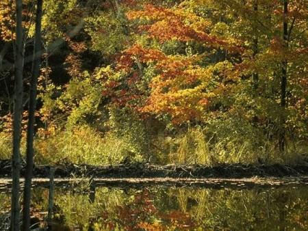 بالصور صور مناظر طبيعيه خلابة , صور جميله ومميزة 4246 8