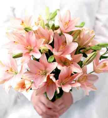 بالصور صور زهور اجمل صور الزهور صور زهور تهبل , اجمل ورود ملونه 4279 1