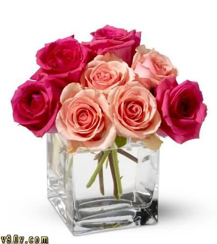 بالصور صور زهور اجمل صور الزهور صور زهور تهبل , اجمل ورود ملونه 4279 11