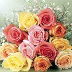 صور زهور اجمل صور الزهور صور زهور تهبل , اجمل ورود ملونه