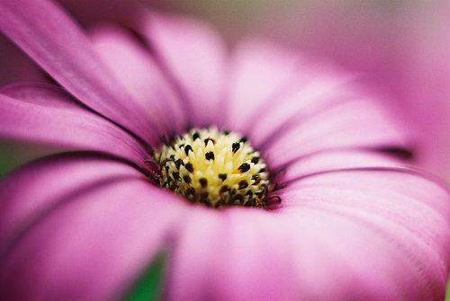 بالصور صور زهور اجمل صور الزهور صور زهور تهبل , اجمل ورود ملونه 4279 3