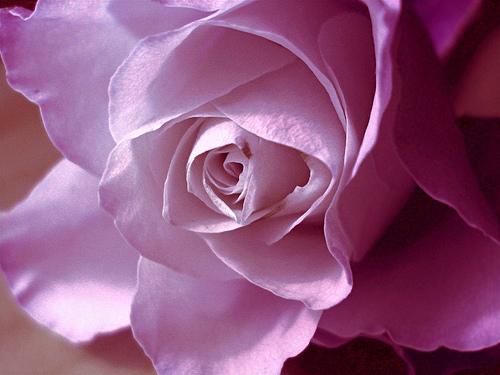 بالصور صور زهور اجمل صور الزهور صور زهور تهبل , اجمل ورود ملونه 4279 4