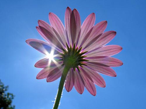 بالصور صور زهور اجمل صور الزهور صور زهور تهبل , اجمل ورود ملونه 4279 5