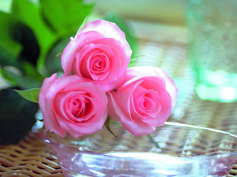 بالصور صور زهور اجمل صور الزهور صور زهور تهبل , اجمل ورود ملونه 4279 9