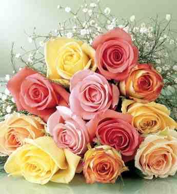 بالصور صور زهور اجمل صور الزهور صور زهور تهبل , اجمل ورود ملونه 4279