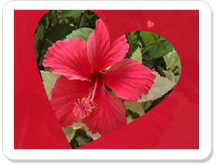بالصور صور قلوب صور ورود متحركة صور ورود عيد الحب , صور رومانسيه جدا 4283 14