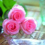صور اجمل ورد رومانسي , اجمل زهور الحب