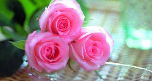 صوره صور اجمل ورد رومانسي , اجمل زهور الحب