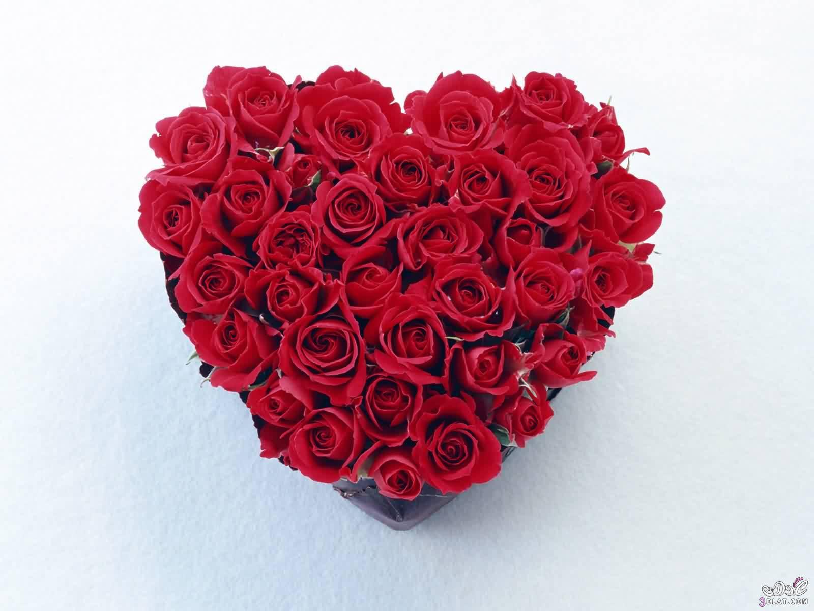 بالصور صور ورود على شكل قلوب بمناسبة عيد الحب صور ورد على شكل قلب لعيد الحب 4305 10