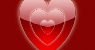صور صور ورود على شكل قلوب بمناسبة عيد الحب صور ورد على شكل قلب لعيد الحب