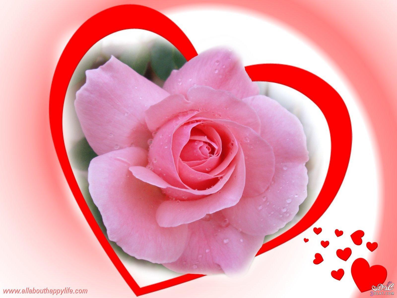بالصور صور ورود على شكل قلوب بمناسبة عيد الحب صور ورد على شكل قلب لعيد الحب 4305 4