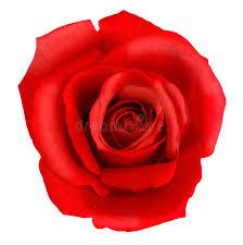 بالصور صور ورود على شكل قلوب بمناسبة عيد الحب صور ورد على شكل قلب لعيد الحب 4305 8