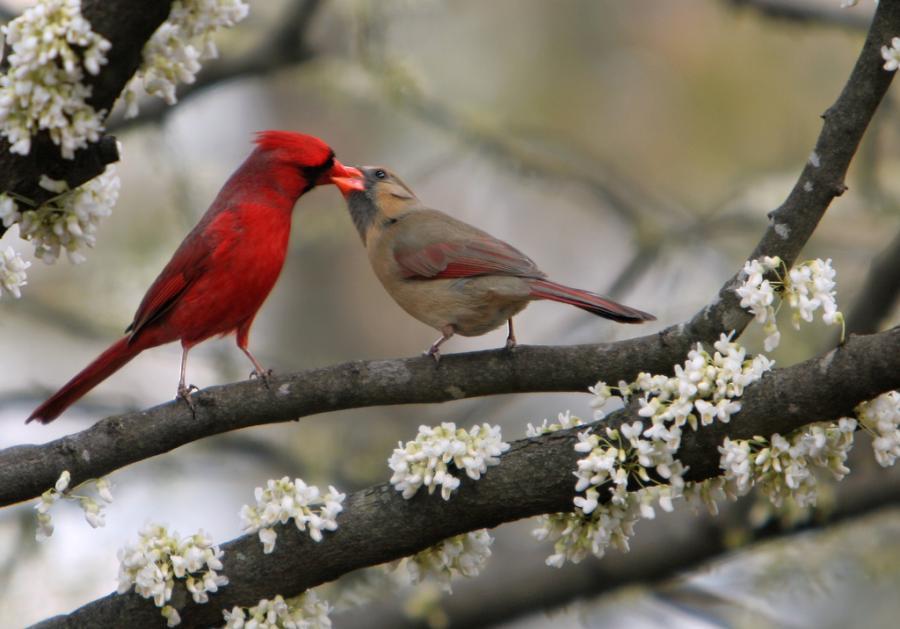 بالصور صور اجمل صور اطهر انواع الحب احلي صور حب مثيرة , اجمل صور الحب 4495 11