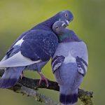 صور اجمل صور اطهر انواع الحب احلي صور حب مثيرة , اجمل صور الحب