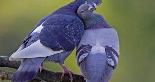 بالصور صور اجمل صور اطهر انواع الحب احلي صور حب مثيرة , اجمل صور الحب 4495 14 310x165