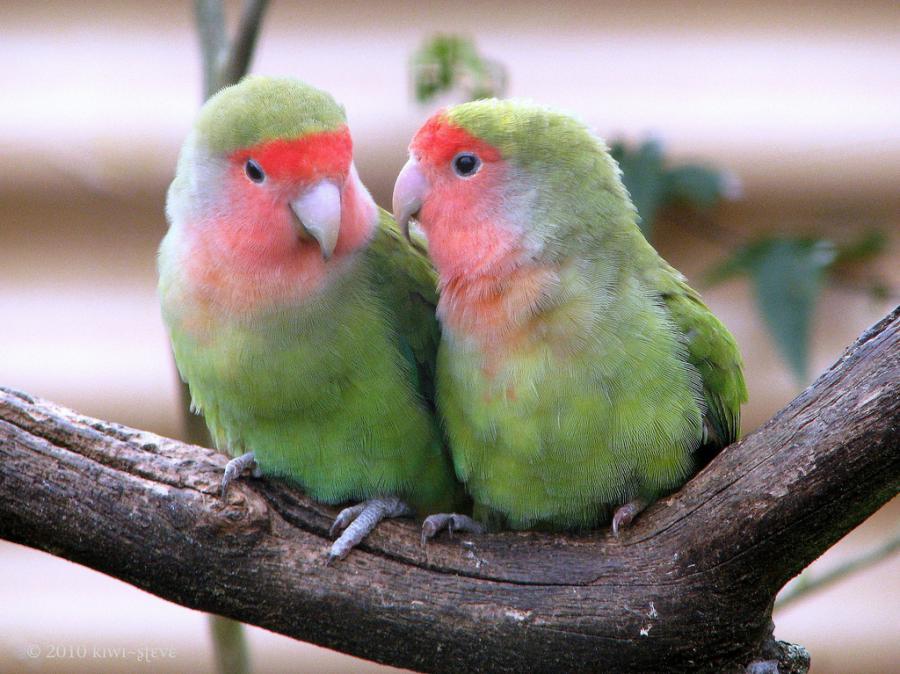 بالصور صور اجمل صور اطهر انواع الحب احلي صور حب مثيرة , اجمل صور الحب 4495 2