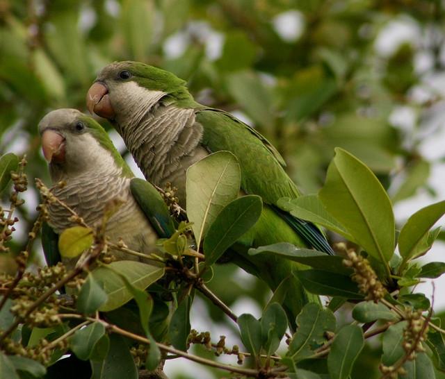 بالصور صور اجمل صور اطهر انواع الحب احلي صور حب مثيرة , اجمل صور الحب 4495 4