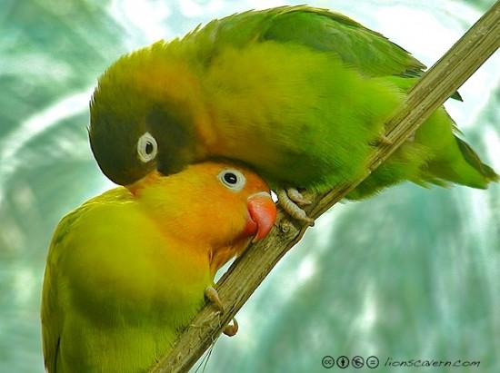 بالصور صور اجمل صور اطهر انواع الحب احلي صور حب مثيرة , اجمل صور الحب 4495 6