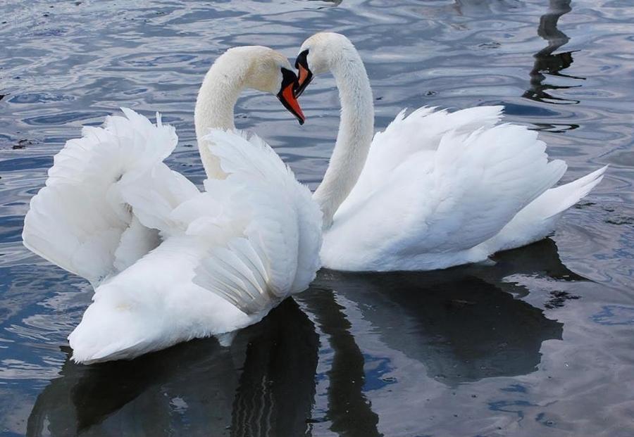 بالصور صور اجمل صور اطهر انواع الحب احلي صور حب مثيرة , اجمل صور الحب 4495 7