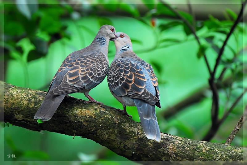 بالصور صور اجمل صور اطهر انواع الحب احلي صور حب مثيرة , اجمل صور الحب 4495 8