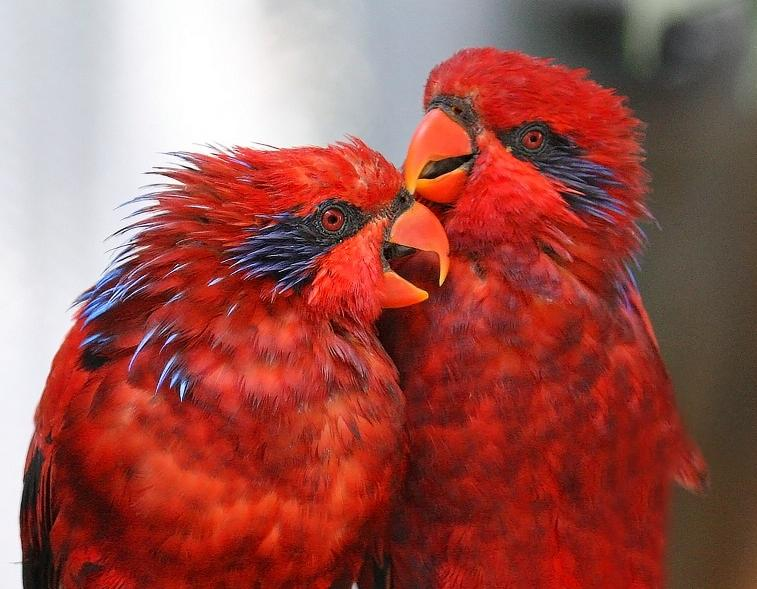 بالصور صور اجمل صور اطهر انواع الحب احلي صور حب مثيرة , اجمل صور الحب 4495 9
