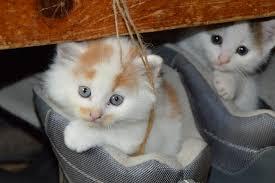 صور صور اجمل واحدث صور قطط مضحكة اجمل القطط المضحكة , صورة قطة تخبل