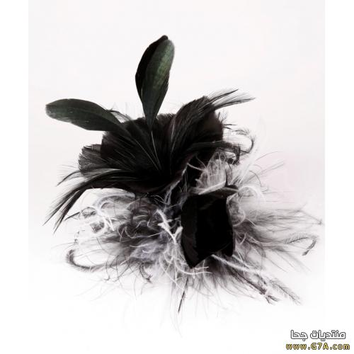 بالصور صور ورد اسود اجمل صور ورود سوداء متحركة صور زهور و ورد باللون الاسود 4533 8