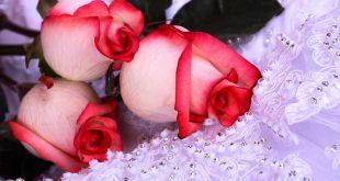 صور زهور رومانسيه , اقوى وهره رومانسيه