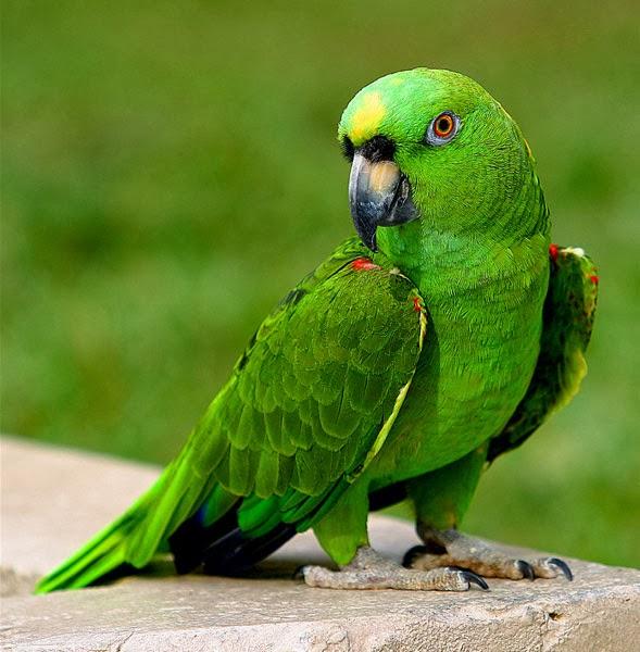 صوره صور عصافير تحفة , عصفوره ولا فى الاحلام
