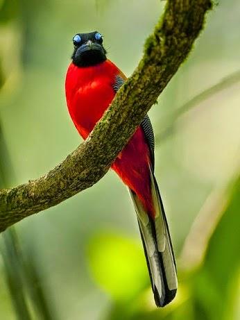 صورة صور عصافير تحفة , عصفوره ولا فى الاحلام