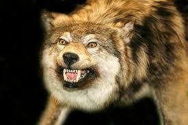 صوره صور حيوانات صور حيوانات مفترسة صور حيوانات مضحكة