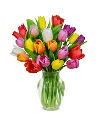 بالصور صور خلفيات ورود جميلة جدا عالية الدقة , صوره رائعه عن الزهور unnamed file 2184