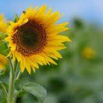 صور خلفيات ورود جميلة جدا عالية الدقة , صوره رائعه عن الزهور