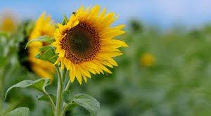 صوره صور خلفيات ورود جميلة جدا عالية الدقة , صوره رائعه عن الزهور