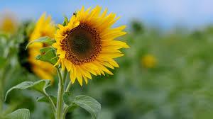 صورة صور خلفيات ورود جميلة جدا عالية الدقة , صوره رائعه عن الزهور