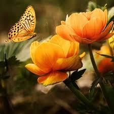 بالصور صور خلفيات ورود جميلة جدا عالية الدقة , صوره رائعه عن الزهور unnamed file 2189