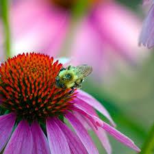 بالصور صور خلفيات ورود جميلة جدا عالية الدقة , صوره رائعه عن الزهور unnamed file 2191