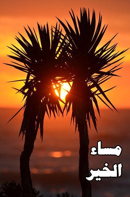 بالصور صور اجمل صور رومانسية صور حب و رومانسية , اقوه صوره معبر ه رومانسيه unnamed file 2331