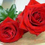 صور رومانسية باللون الاحمر اجمل صور بنات رومانسية صور ورود حمراء رومانسية , خلفيات قلوب للعشاق