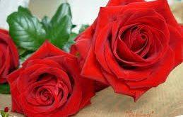 بالصور صور رومانسية باللون الاحمر اجمل صور بنات رومانسية صور ورود حمراء رومانسية , خلفيات قلوب للعشاق unnamed file 3066 259x165