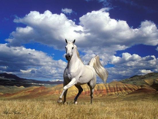 بالصور صور احصنه , اروع صور احصنة طبيعيه 1507 1