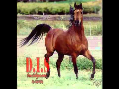بالصور صور احصنه , اروع صور احصنة طبيعيه 1507 4
