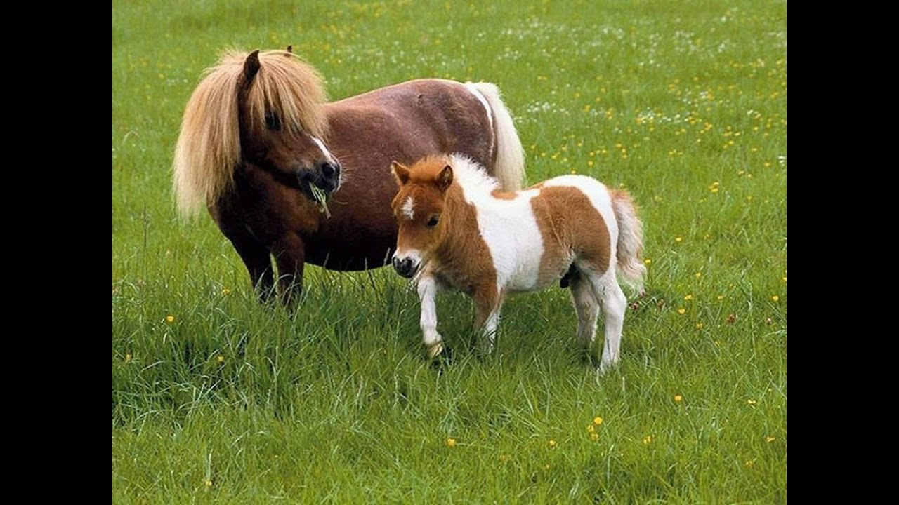 بالصور صور احصنه , اروع صور احصنة طبيعيه 1507 5