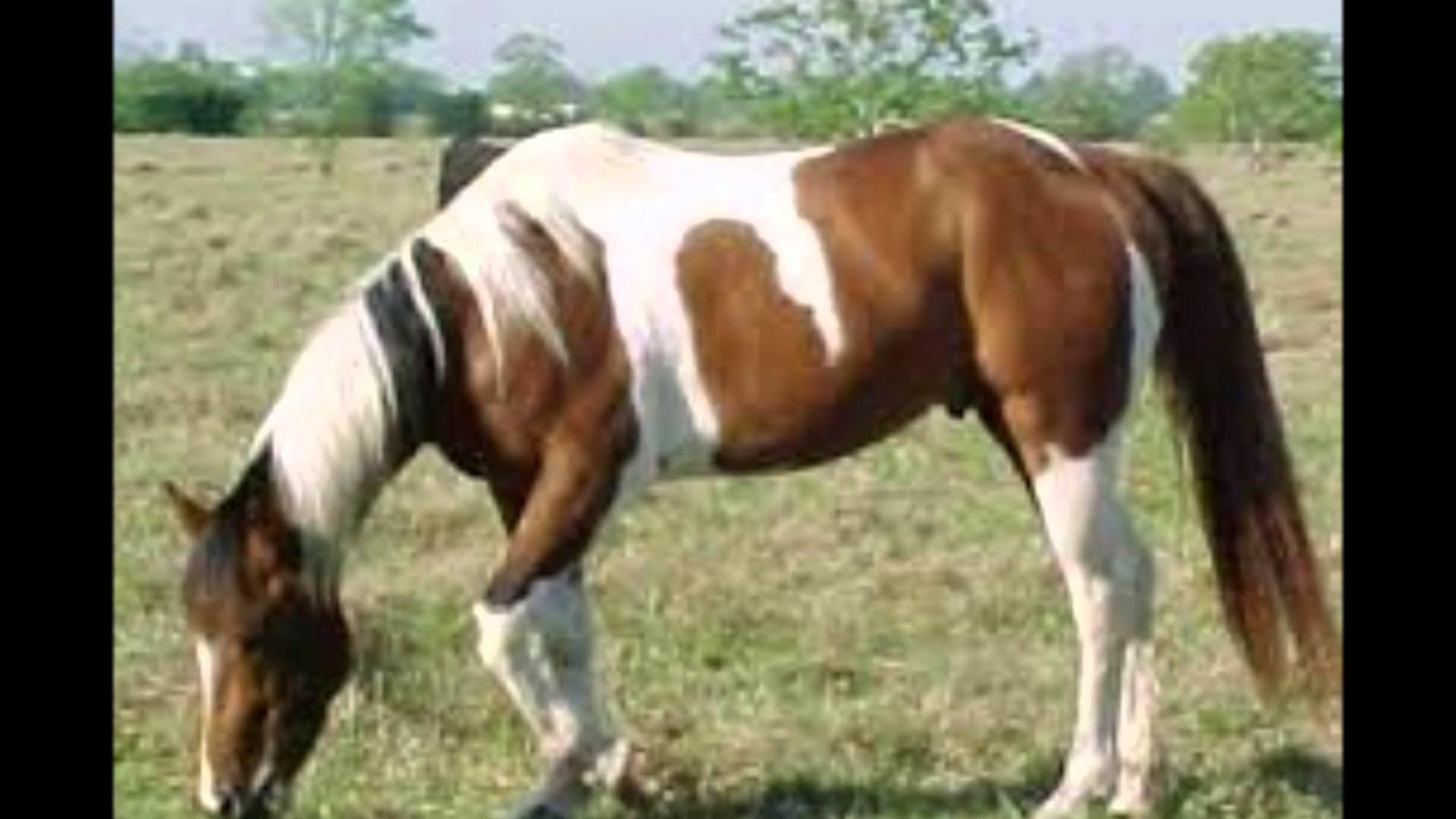 بالصور صور احصنه , اروع صور احصنة طبيعيه 1507 7