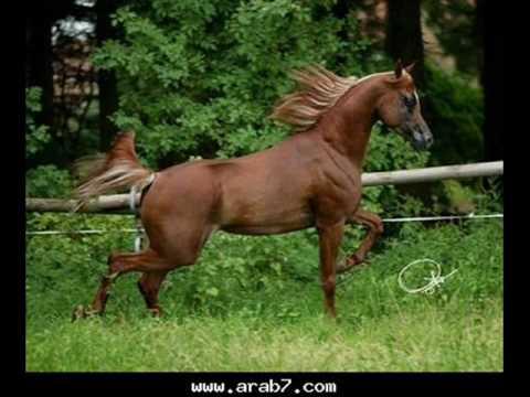 بالصور صور احصنه , اروع صور احصنة طبيعيه 1507 8