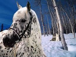 بالصور صور احصنه , اروع صور احصنة طبيعيه 1507 9