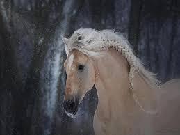 بالصور صور احصنه , اروع صور احصنة طبيعيه 1507
