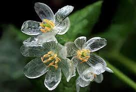 بالصور صور زهور , اجمل الورود 1589 2
