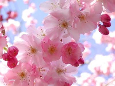 بالصور صور زهور , اجمل الورود 1589 5