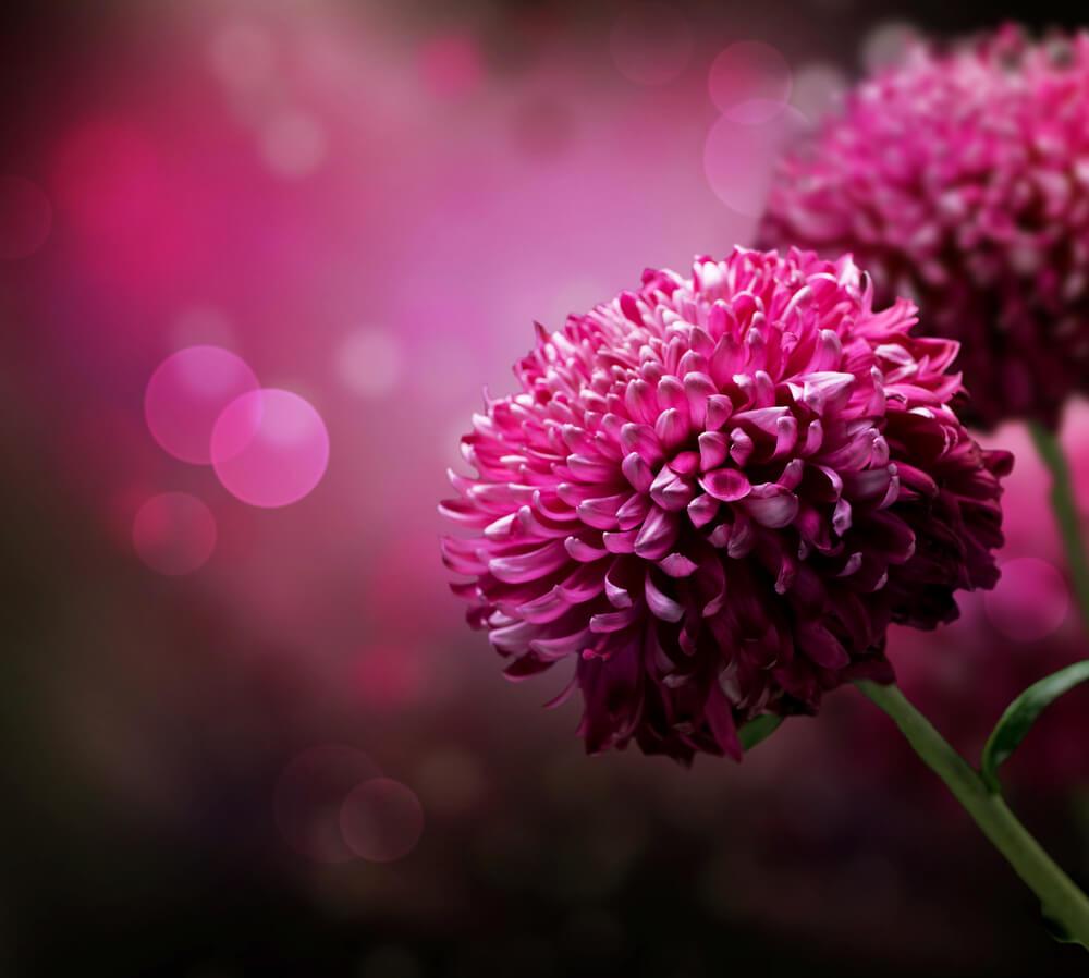 بالصور صور زهور , اجمل الورود 1589 6